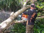 PANGKAS: Tim TRC BPBD Kota Palangka Raya saat memangkas pohon yang dianggap rawan tumbang, Sabtu (22/5/2021).FOTO:BPBD