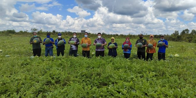 PANEN: Kebersamaan tim Dinas Pertanian dan Ketahanan Pangan (DPKP) Kota Palangka Raya, baru-baru ini.FOTO:HUMAS