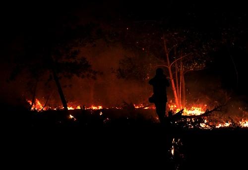 Dalam Lima Bulan, 313 Hektare Lahan Terbakar