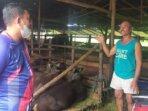 iduladha hewan kurban sapi