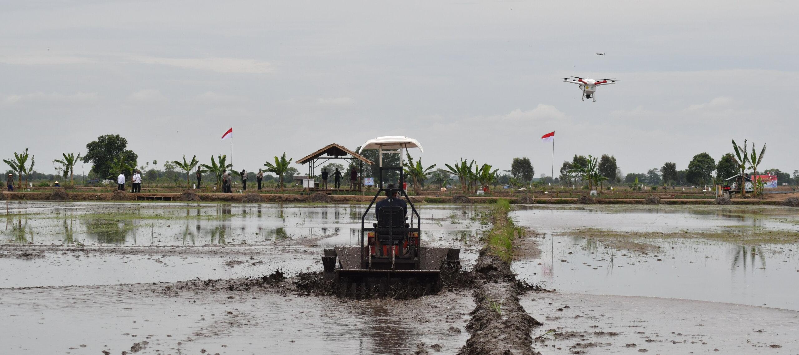 FOOD ESTATE: Hamparan sawah di kawasan food estate Desa Belanti Siam, Kecamatan Pandih Batu, Pulpis. Se bulan terakhir para petani setempat mengeluhkan tingginya harga pupuk bersubsidi.