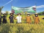 PANEN RAYA: Wakil Ketua DPRD Kotawaringin Timur H Rudianur (dua dari kanan) beserta Bupati H Halikinnor dan Wakil Bupati Irawati serta forkopimda saat panen raya, belum lama ini.